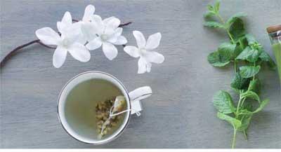 technique naturelle - plantes