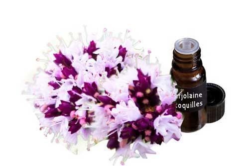 huile essentielle de Marjolaine à coquilles