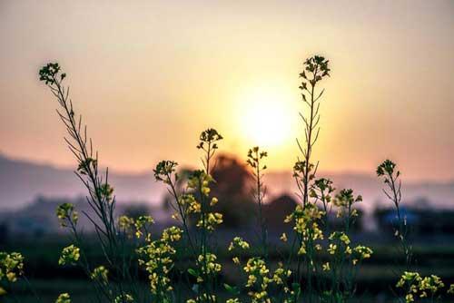 la naturopathie infos